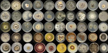 Fungi samples